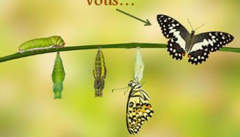 papillons vous